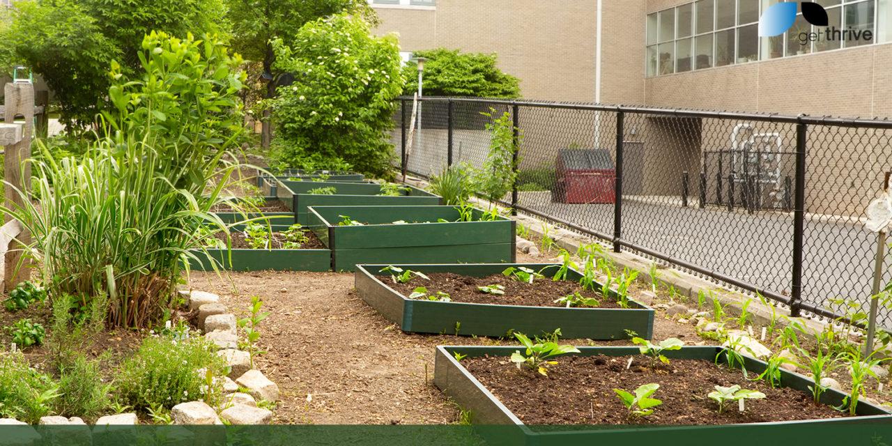 School Gardens Feed The Brain