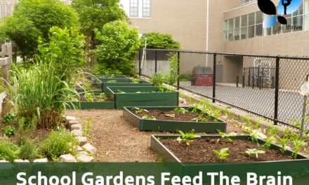 School Gardens Feed The Brain