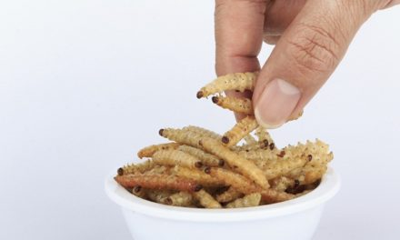 Bug Snacks, the latest protein packed food trend?