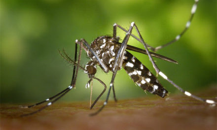 Critical Details About Your Blood and Sweat—Avoiding Zika