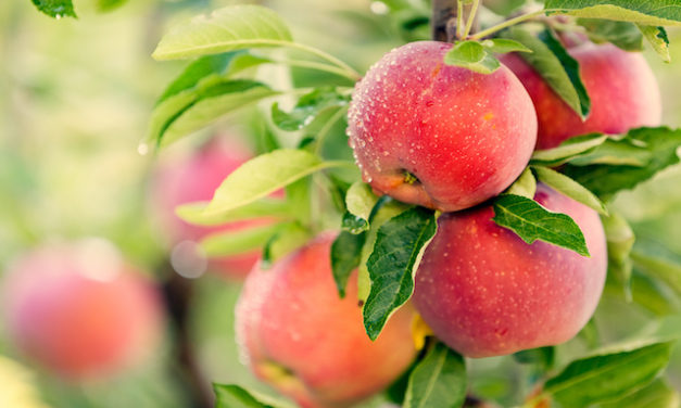Is Your Fresh Apple Really Fresh?