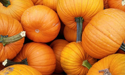 Best Fall Harvested Foods to Keep You Healthy