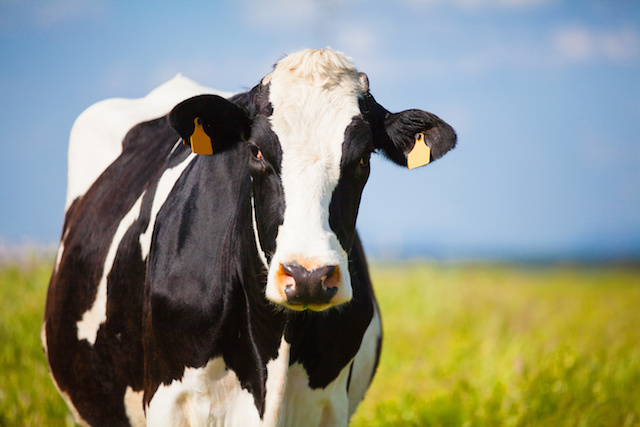 """How To Be a Carb Cow but Look Like a Cougar: A """"Good"""" Carb Guide"""