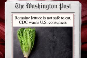 E. Coli tainted lettuce 2
